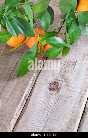 Branch of tangerines on wooden table - Stock Photo