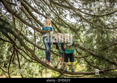 Two brothers and their sister climb trees in the forest. - Stock Photo