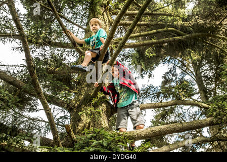 Two brothers climb trees in the forest. - Stock Photo
