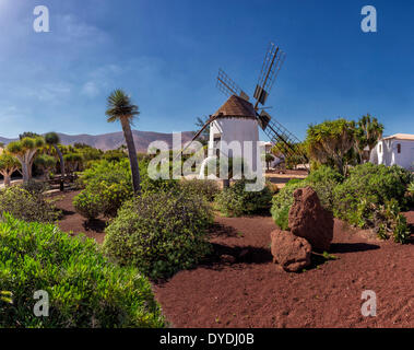 Stunning Cactus Garden Fuerteventura Canary Islands Stock Photo Royalty  With Extraordinary Spain Europe Fuerteventura Canary Islands Antigua Molino De Antigua  Cactus With Endearing Garden Design For Sloping Garden Ideas Also Citronella Garden Candles In Addition Chrissies Garden And Garden Furniture Warrington As Well As Botanic Garden Dundee Additionally Nirwana Gardens From Alamycom With   Extraordinary Cactus Garden Fuerteventura Canary Islands Stock Photo Royalty  With Endearing Spain Europe Fuerteventura Canary Islands Antigua Molino De Antigua  Cactus And Stunning Garden Design For Sloping Garden Ideas Also Citronella Garden Candles In Addition Chrissies Garden From Alamycom