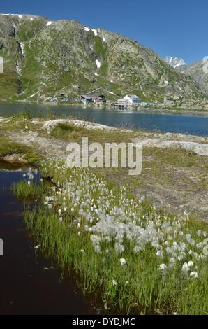 Switzerland Europe Swiss Uri Berne bernese alps grimsel grimsel pass grimselpass lake water mountains view nature - Stock Photo