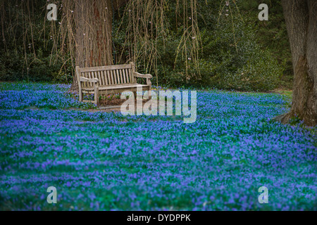 empty park bench in blue field of flowers, spring time - Stock Photo