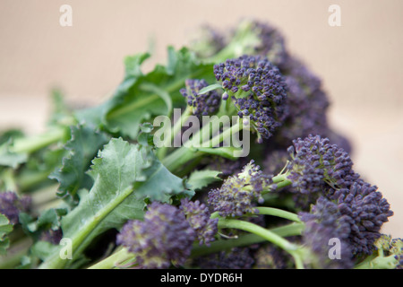 Purple sprouting broccoli, close-up - Stock Photo
