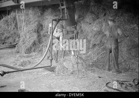 Great depression; Baled straw to be used for making strawboard at Container Corporation of America plant, - Stock Photo