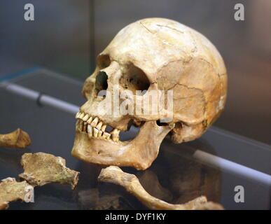 Reconstructed skull from the remains of a Syrian man aged about 45 years. It was reconstructed from remains found - Stock Photo