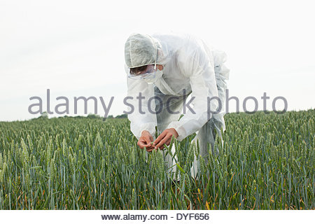 Scientist in protective gear examining plants - Stock Photo