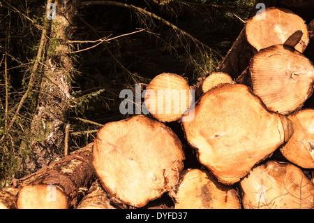 Freshly logged timber, piled up - Stock Photo