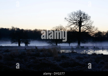 Early morning mist hanging over Leg of Mutton pond in Richmond Park, London, UK - Stock Photo