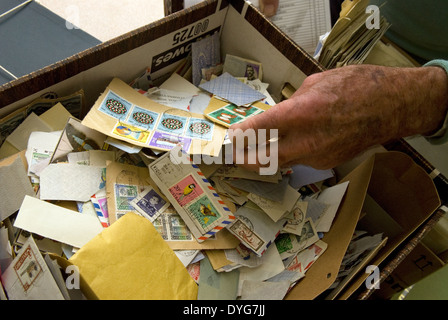 Attendee at a stamp auction leafing through a box of assorted stamps, Petersfield, Hampshire, UK. - Stock Photo