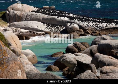 Boulders Beach near Simon's Town, Cape Town, Western Cape, South Africa - Stock Photo