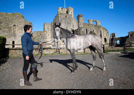 Middleham Castle Yorkshire, UK. 18th April 2014. Ben Haslam, Ben Haslam Racing, dual purpose horse racing trainer - Stock Photo