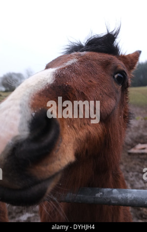 Close up of a horse head - Stock Photo