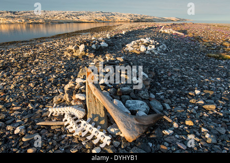 Canada, Nunavut Territory, Whaler's graves on Deadman Island along Hudson Bay - Stock Photo