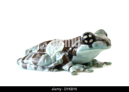 amazonian canopy frog (Phrynohyas resinifictrix), cutted out. - Stock Photo