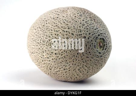 Cantaloupe melone (Cucumis melo var. cantalupensis)