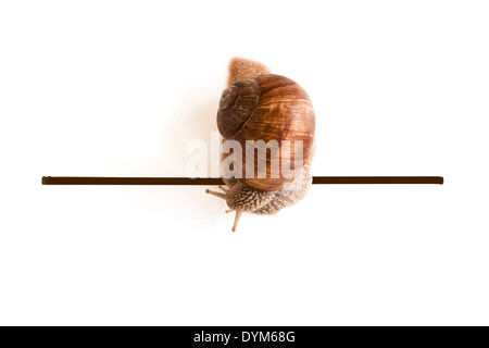 Cute snail going over the finish line. - Stock Photo