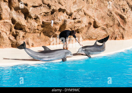 Dolphin Show, Loro Parque zoo, Puerto de la Cruz, Santa Cruz de Tenerife, Tenerife, Canary Islands, Spain - Stock Photo