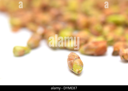 black currant buds isolated on white background - Stock Photo