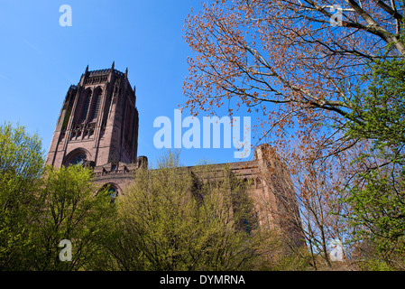 A view of Liverpool Anglican Cathedral from St. James Cemetery. - Stock Photo