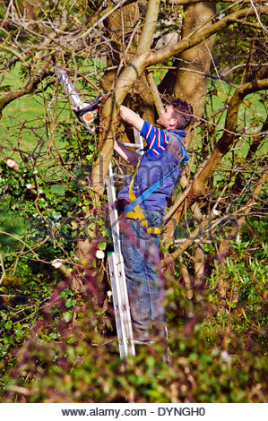 male tree surgeon standing on ladder with chain saw cutting down tree branches without any safety gear - Stock Photo