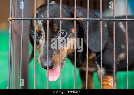 Cute little Dog in a Cage on a Market in Puerto Princesa, Palawan, Philippines - Stock Photo