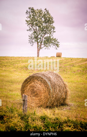 Hay bales and lone tree in a field on rural Prince Edward Island, Canada. With vintage filter effect. - Stock Photo
