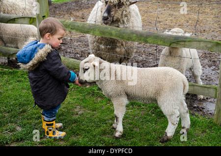 A young boy feeding a lamb at an urban farm - Stock Photo