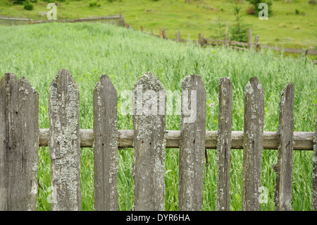 old wooden fence with moss and rusty nails around field of oat - Stock Photo