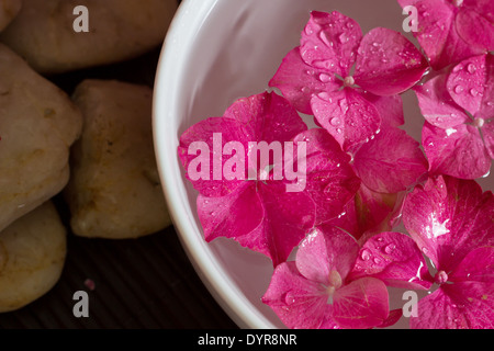 Pink hydrangea flowers floating in a bowl with essential oils. Shallow depth of field. Landscape. Spa scene, relaxation. - Stock Photo