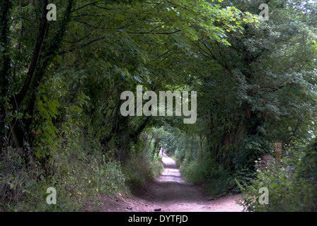 Tree-tunnel path to North Leigh Roman villa, the remains of a manor house, 1st to 3rd century AD, North Leigh, Oxfordshire - Stock Photo