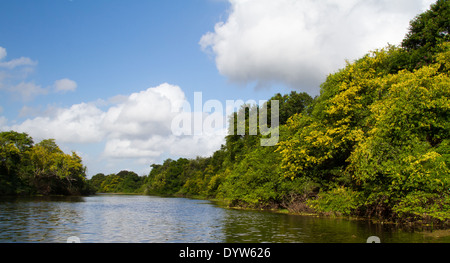 Monkey River, Crooked Tree, Belize - Stock Photo