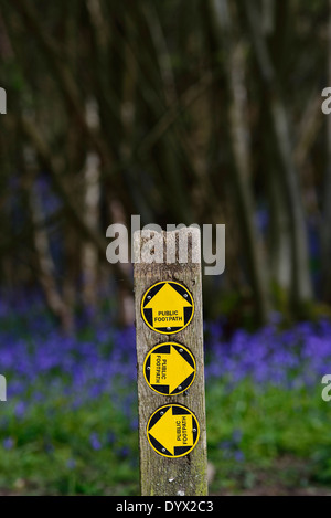 A carpet of bluebells at Guestling Wood, Pett, East Sussex. UK - Stock Photo