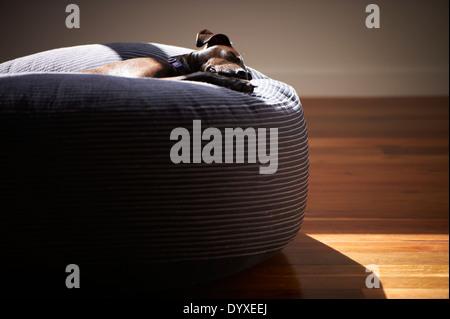 Staffordshire Terrier Cross - Stock Photo