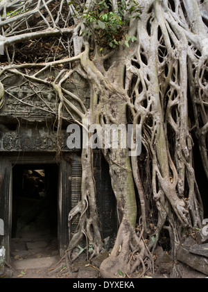 Ta Prohm temple ruin in the forest. Siem Reap, Cambodia - tree root from silk-cotton tree or thitpok - Location - Stock Photo