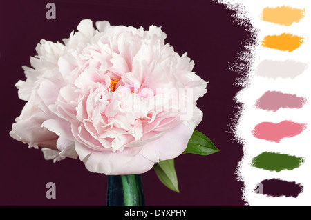 Beautiful pale pink peony flowers in a blue cristal vase , color palette