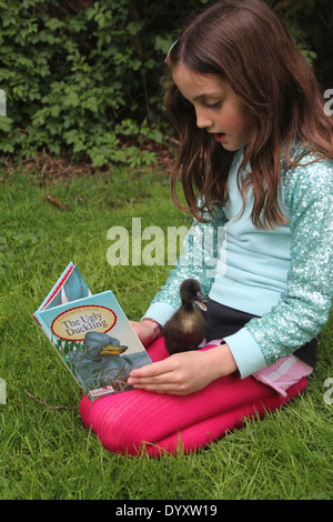 Young girl reading the ugly duckling story to her real pet cayuga duckling, whilst it sits on her lap, UK - Stock Photo