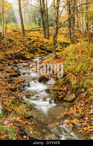 A stream cascades through fallen leaves in a forest in the Catskills Mountains of New York - Stock Photo