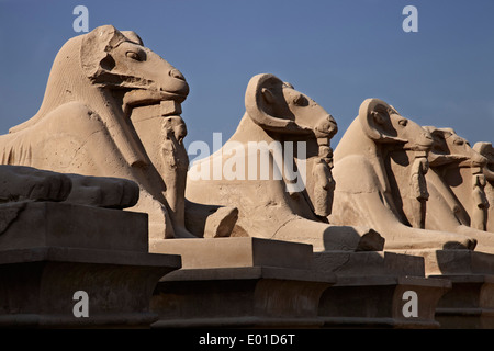 Karnak Temple. Largest religious building in the world. Open air museum. Avenue of rams. - Stock Photo