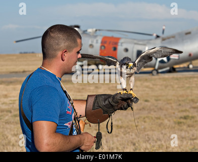 US Air Force Airman 1st Class David Mumme holds Columbia, a female Lanner falcon used to prevent bird strikes on - Stock Photo