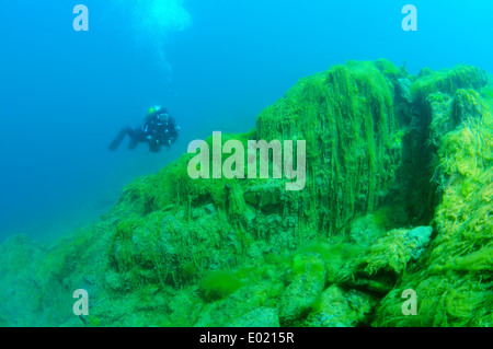 water silk, mermaid's tressses, or blanket weed (Spirogyra) the Ecological catastrophy for Baikal lake - Stock Photo
