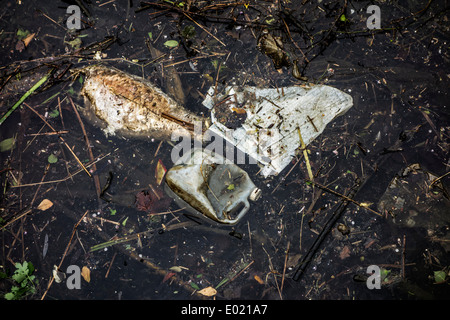 Dead rotten fish floating among rubbish and non-degradable waste in water of river - Stock Photo