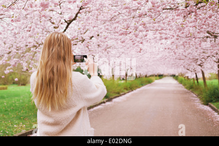 Rear view of a young woman using her mobile phone to capture images of the path and cherry blossoms tree at park. - Stock Photo