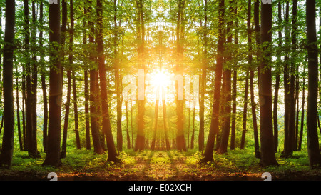 Lovely Sunset behind the Forrest in Upper Franconia - Stock Photo