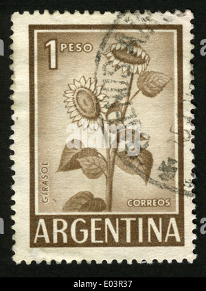 Postage stamp from Argentina depicting a sunflower - Stock Photo