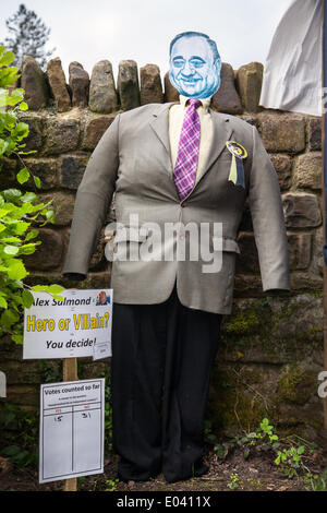 Wray, Lancaster, 1st May 2014.  Dummy Alex Salmond effigy statue, statuette, carving, sculpture, graven image, model, - Stock Photo