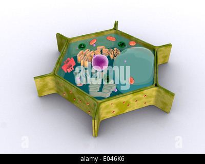 Conceptual image of a plant cell and its components. - Stock Photo