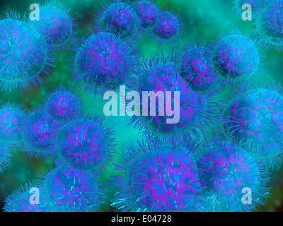 Microscopic view of diplococcus bacterium. - Stock Photo