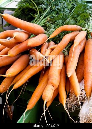 In alliance of fresh carrots At a market for the sales, Ein Bund frischer Moehren auf einem Markt zum Verkauf - Stock Photo