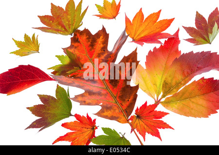 The coloured messengers of the autumn. Sheets on white background - Stock Photo