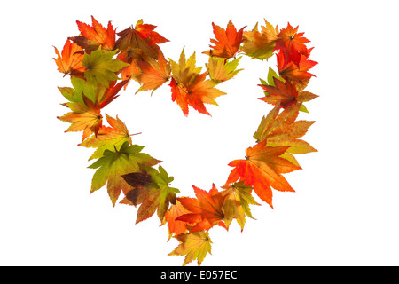 The coloured messengers of the autumn. Sheets on white background in heart form. Symbolic photo for DEAR, Die bunten - Stock Photo